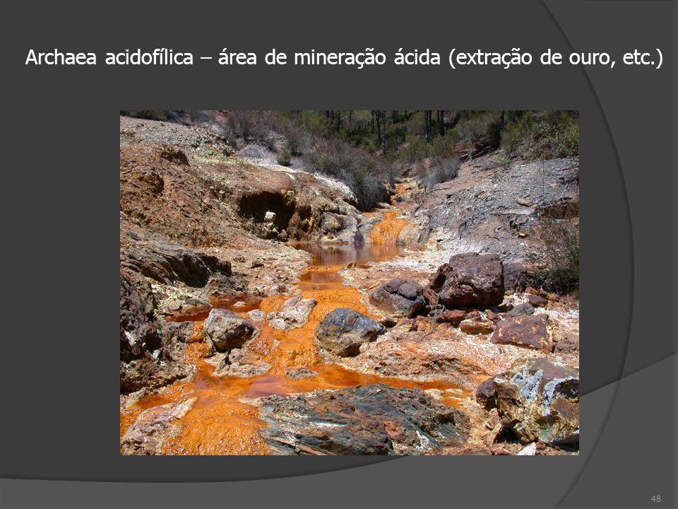 Archaea acidofílica – área de mineração ácida (extração de ouro, etc.)