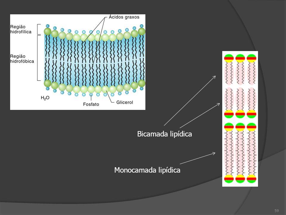Bicamada lipídica Monocamada lipídica