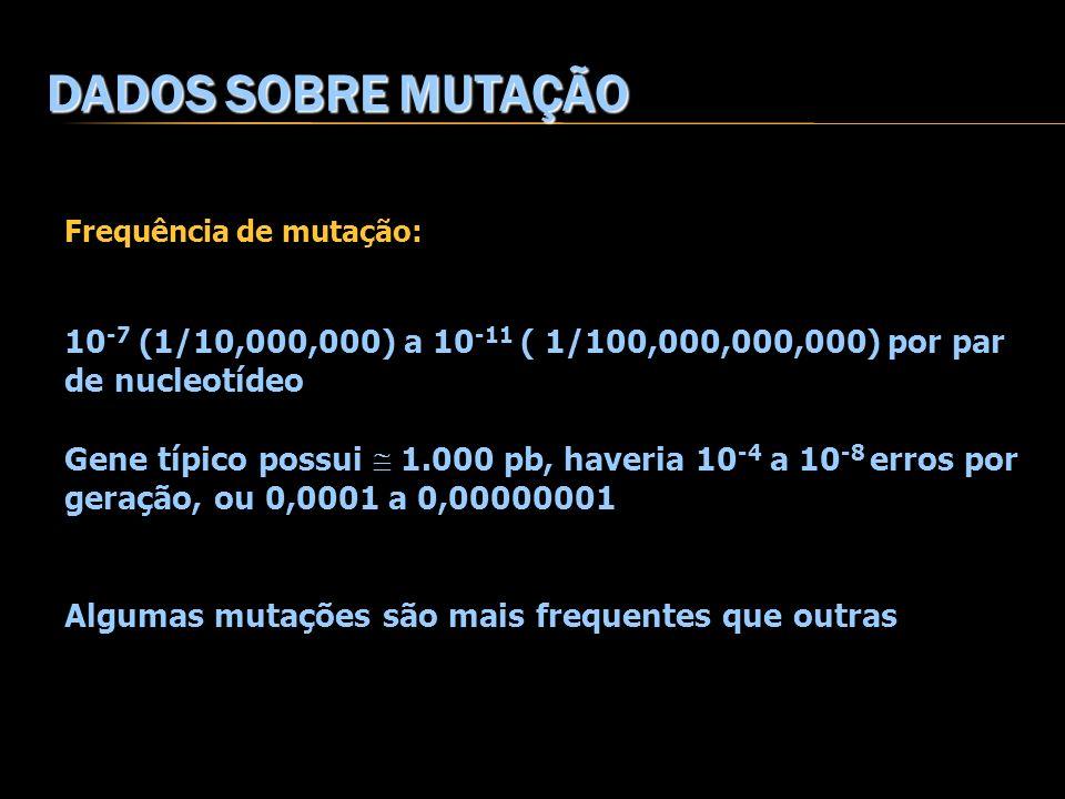 DADOS SOBRE MUTAÇÃO Frequência de mutação: 10-7 (1/10,000,000) a 10-11 ( 1/100,000,000,000) por par de nucleotídeo.
