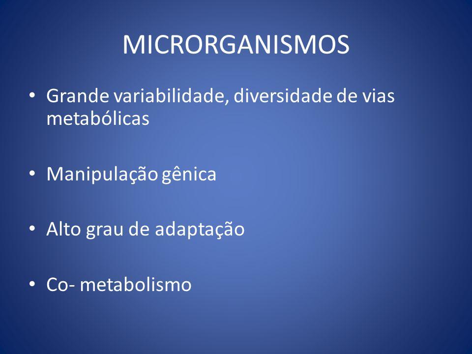 MICRORGANISMOS Grande variabilidade, diversidade de vias metabólicas