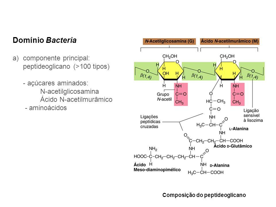 Domínio Bacteria componente principal: peptideoglicano (>100 tipos)