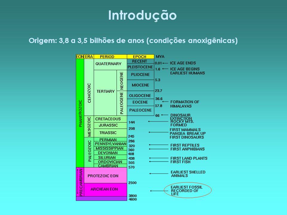 Introdução Origem: 3,8 a 3,5 bilhões de anos (condições anoxigênicas)