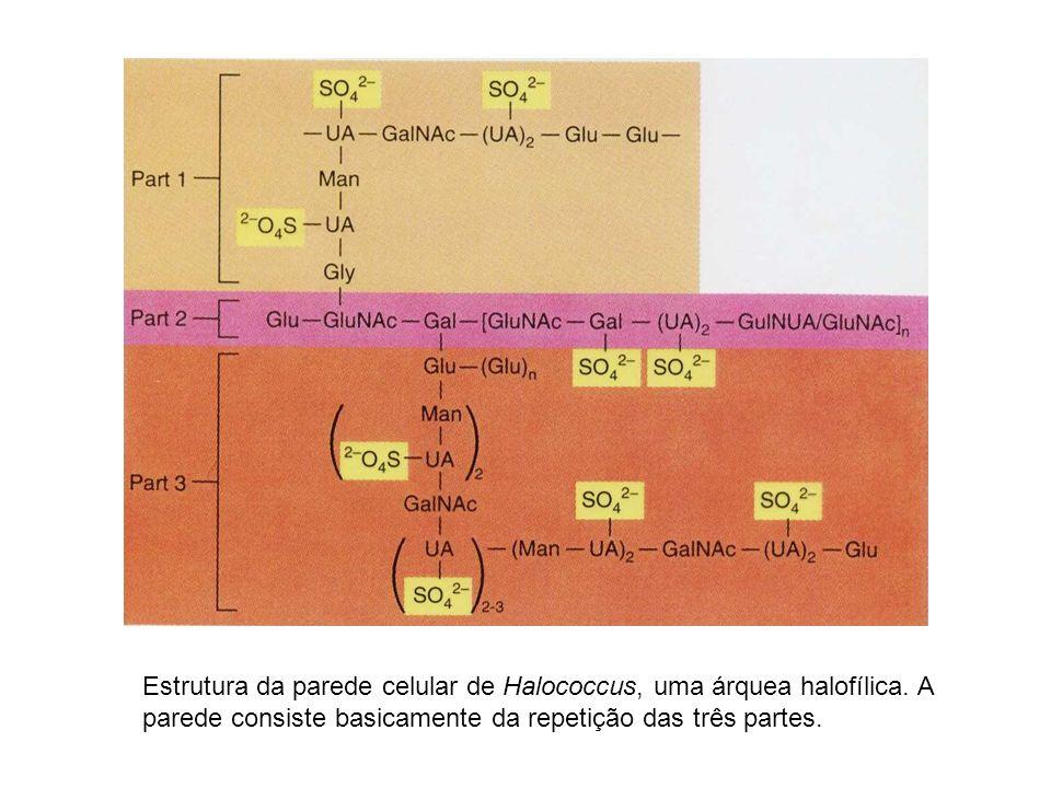 Estrutura da parede celular de Halococcus, uma árquea halofílica
