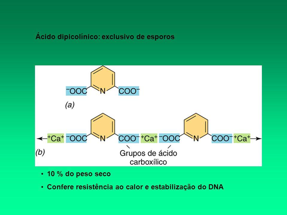 Ácido dipicolínico: exclusivo de esporos