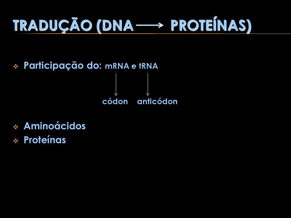 TRADUÇÃO (DNA PROTEÍNAS)