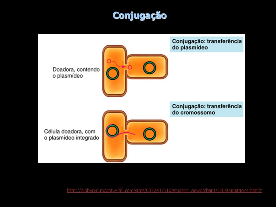 Conjugaçãohttp://highered.mcgraw-hill.com/sites/0072437316/student_view0/chapter20/animations.html#