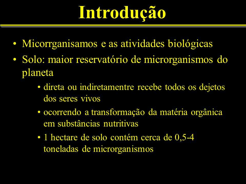 Introdução Micorrganisamos e as atividades biológicas