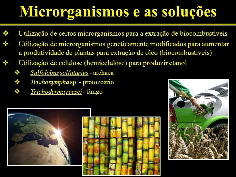 Microrganismos e as soluções