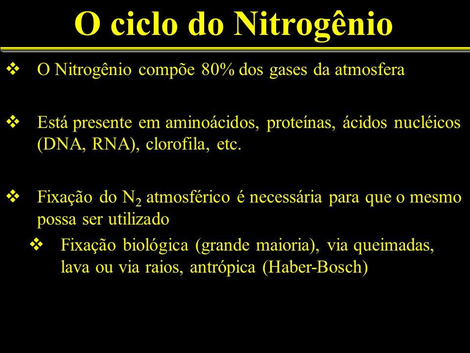O ciclo do Nitrogênio O Nitrogênio compõe 80% dos gases da atmosfera