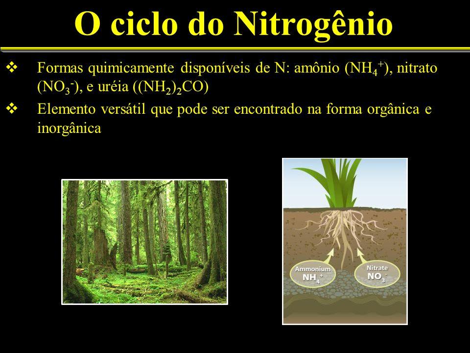 O ciclo do Nitrogênio Formas quimicamente disponíveis de N: amônio (NH4+), nitrato (NO3-), e uréia ((NH2)2CO)