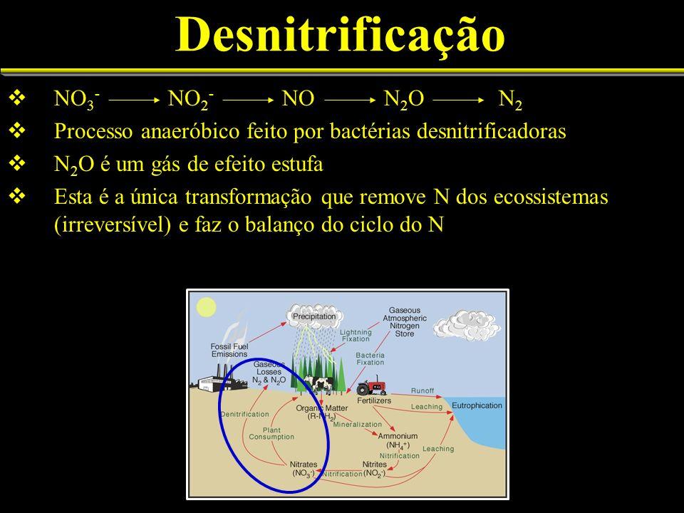 Desnitrificação NO3- NO2- NO N2O N2