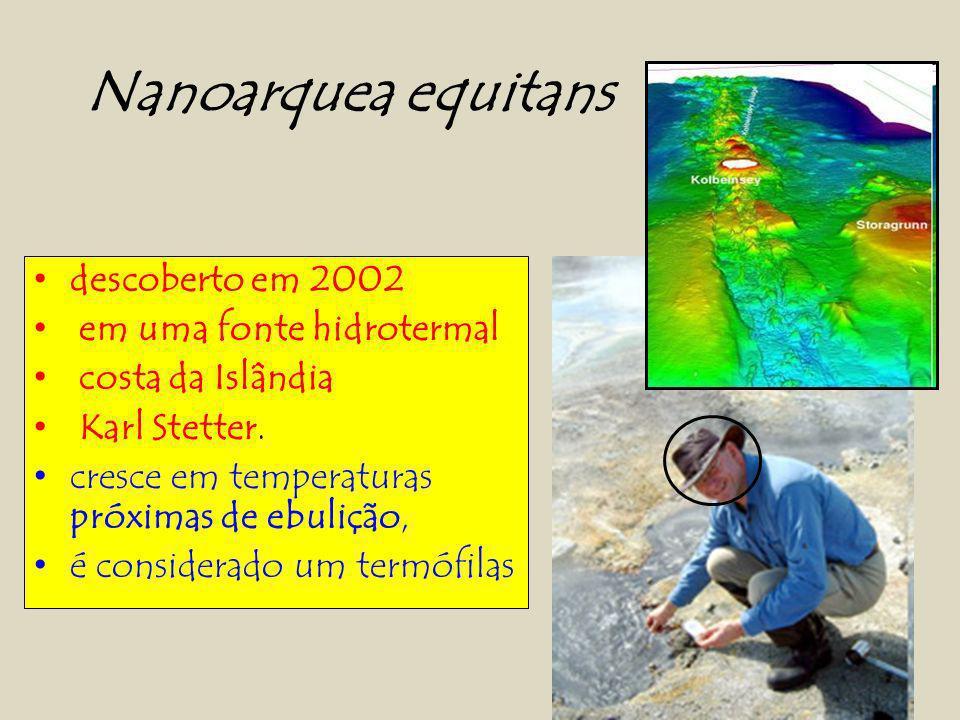 Nanoarquea equitans descoberto em 2002 em uma fonte hidrotermal
