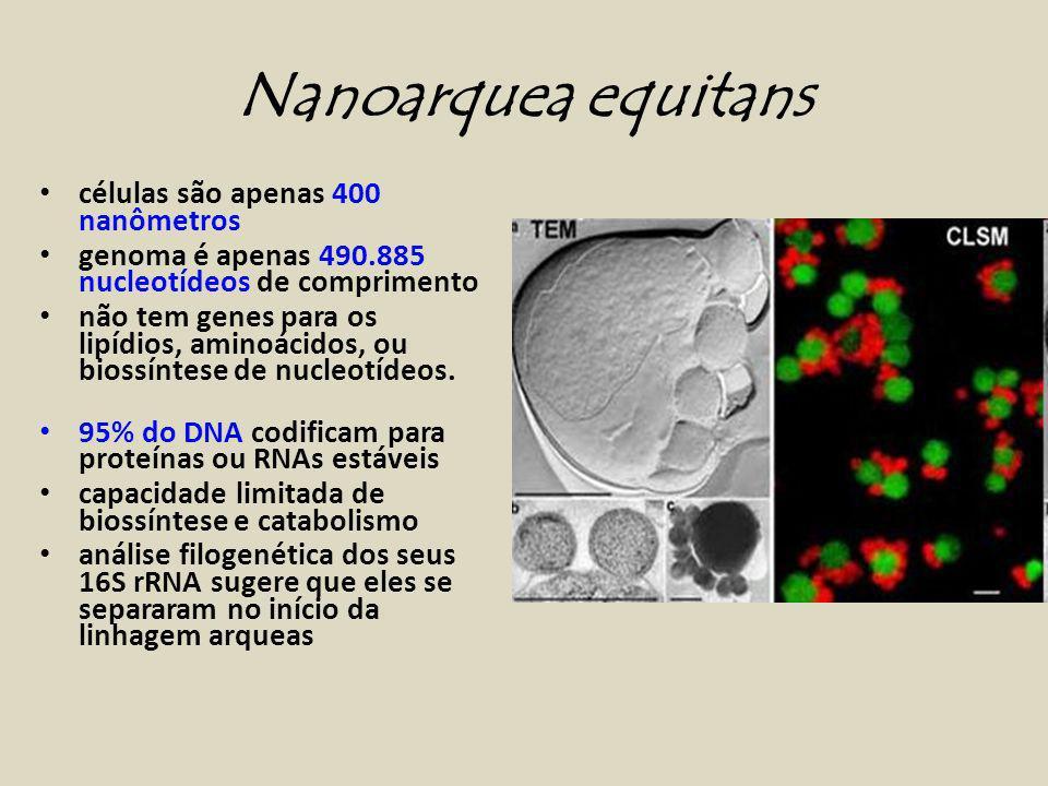 Nanoarquea equitans células são apenas 400 nanômetros