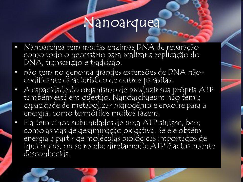 Nanoarquea Nanoarchea tem muitas enzimas DNA de reparação como todo o necessário para realizar a replicação do DNA, transcrição e tradução.