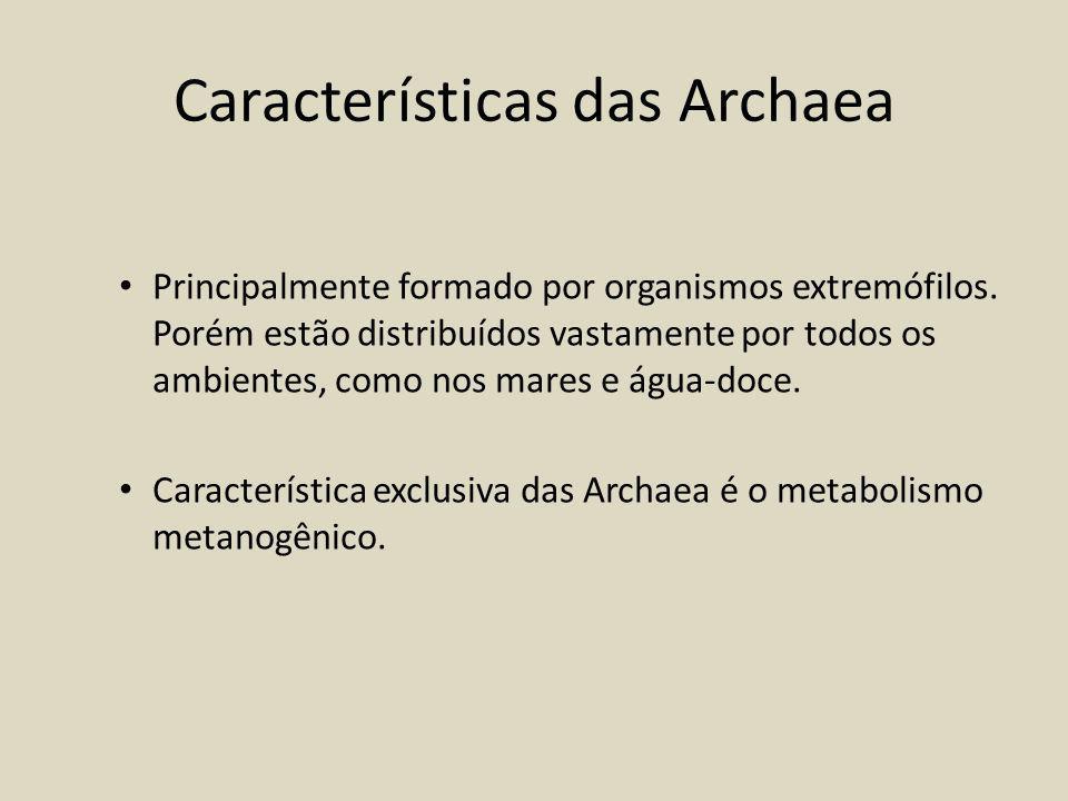 Características das Archaea