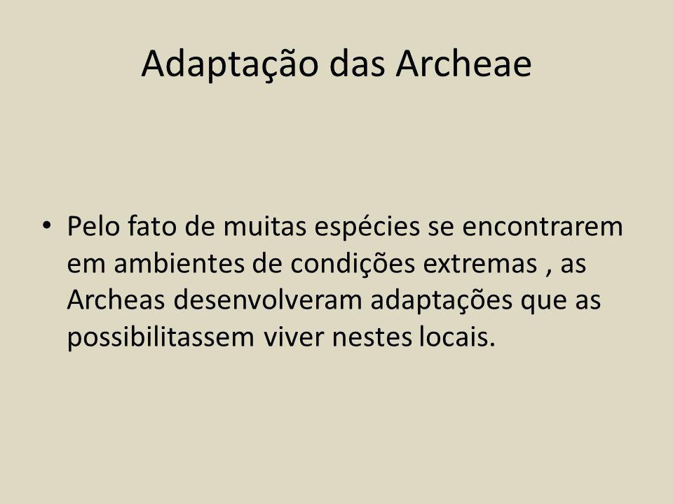 Adaptação das Archeae