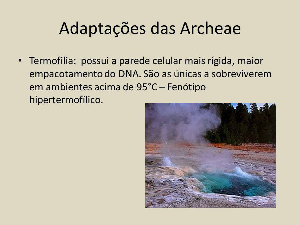 Adaptações das Archeae