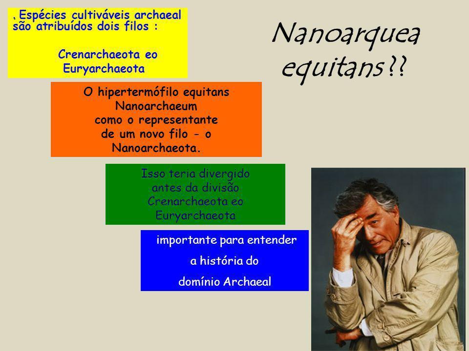 Nanoarquea equitans . Espécies cultiváveis archaeal são atribuídos dois filos : Crenarchaeota eo.
