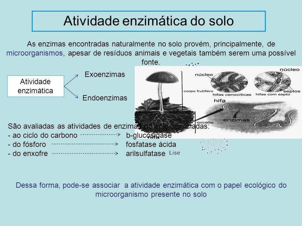 Atividade enzimática do solo