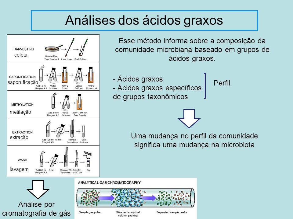 Análises dos ácidos graxos