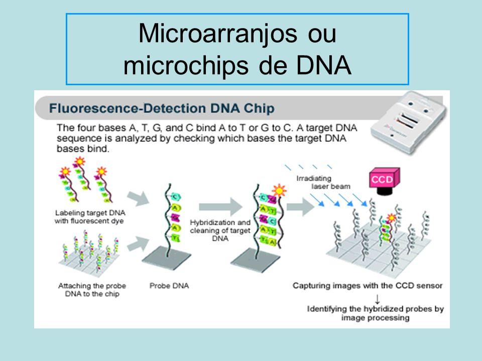 Microarranjos ou microchips de DNA