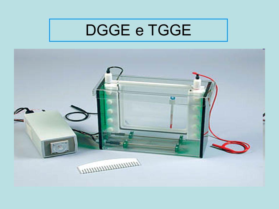 DGGE e TGGE DGGE – Eletroforese em gel de gradiente desnaturante ( denaturing gradient gel electrophoresis)