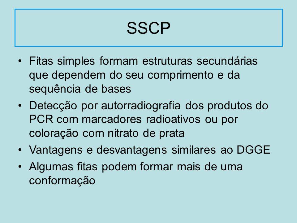 SSCP Fitas simples formam estruturas secundárias que dependem do seu comprimento e da sequência de bases.