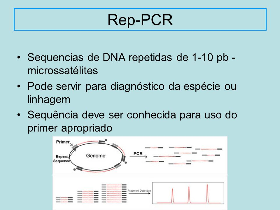 Rep-PCR Sequencias de DNA repetidas de 1-10 pb - microssatélites