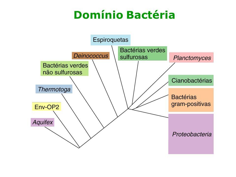 Domínio Bactéria