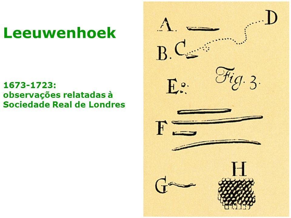 Leeuwenhoek 1673-1723: observações relatadas à