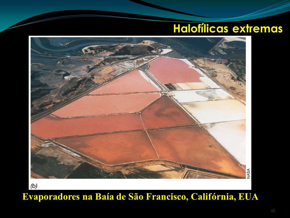 Halofílicas extremas Evaporadores na Baía de São Francisco, Califórnia, EUA