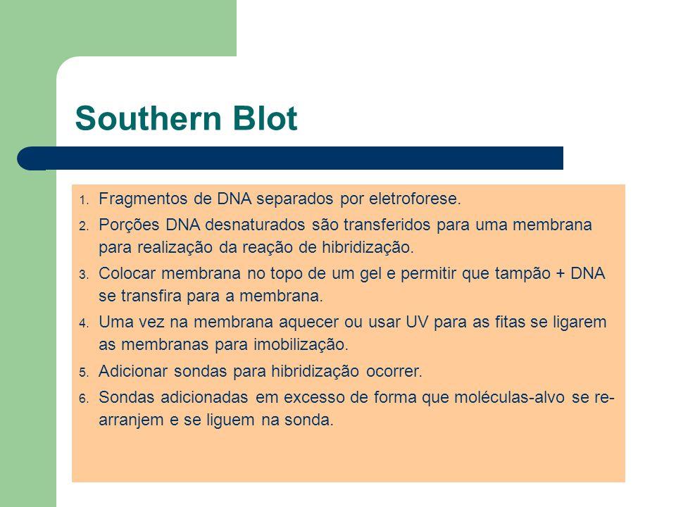 Southern Blot Fragmentos de DNA separados por eletroforese.