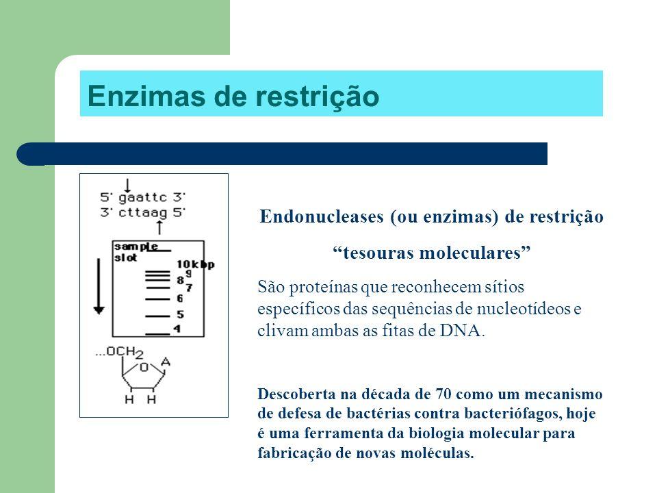 Endonucleases (ou enzimas) de restrição tesouras moleculares