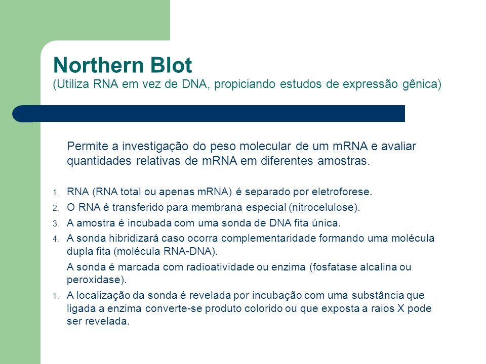 Northern Blot (Utiliza RNA em vez de DNA, propiciando estudos de expressão gênica)