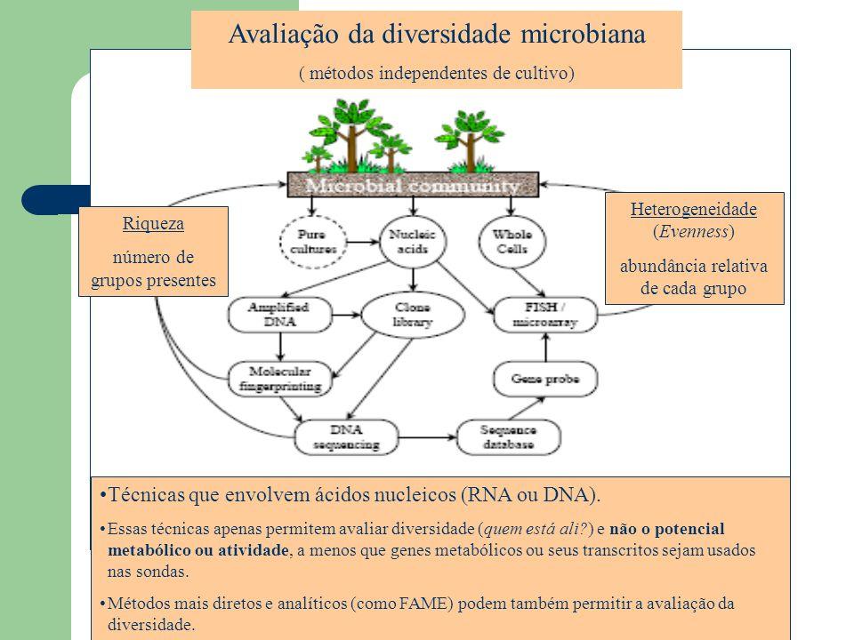 Avaliação da diversidade microbiana