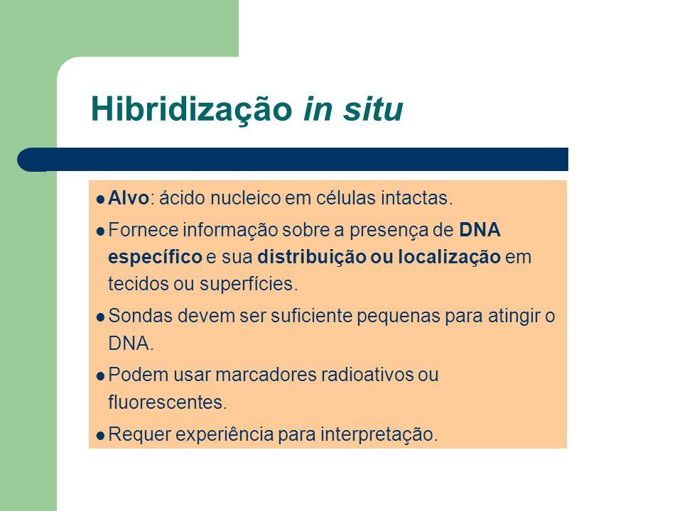 Hibridização in situ Alvo: ácido nucleico em células intactas.