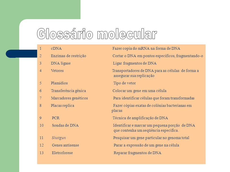 Glossário molecular cDNA Fazer copia do mRNA na forma de DNA