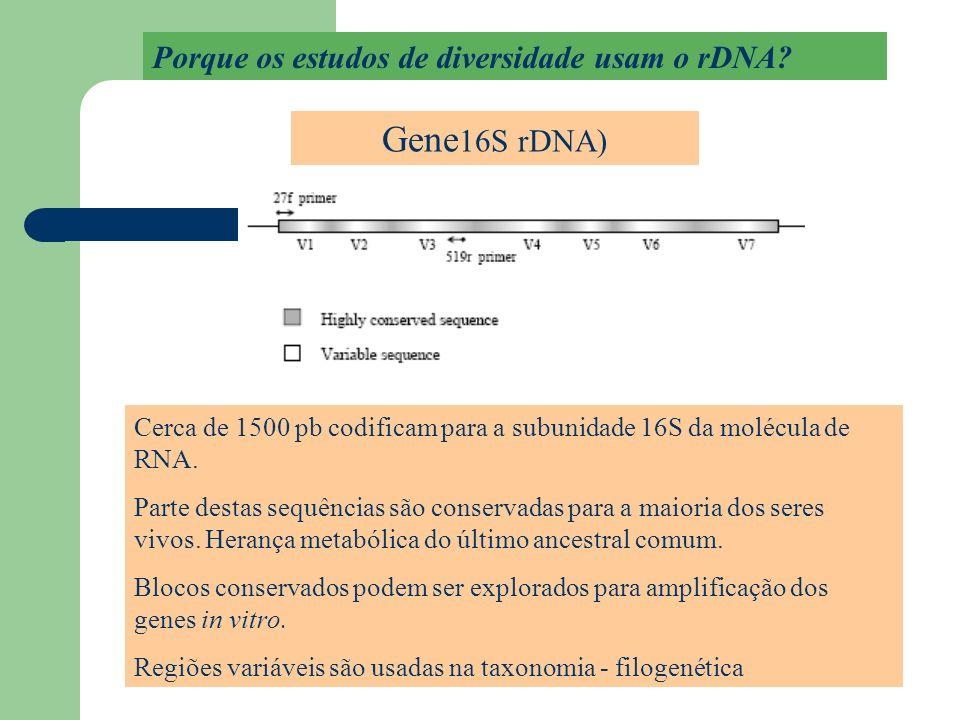 Gene16S rDNA) Porque os estudos de diversidade usam o rDNA