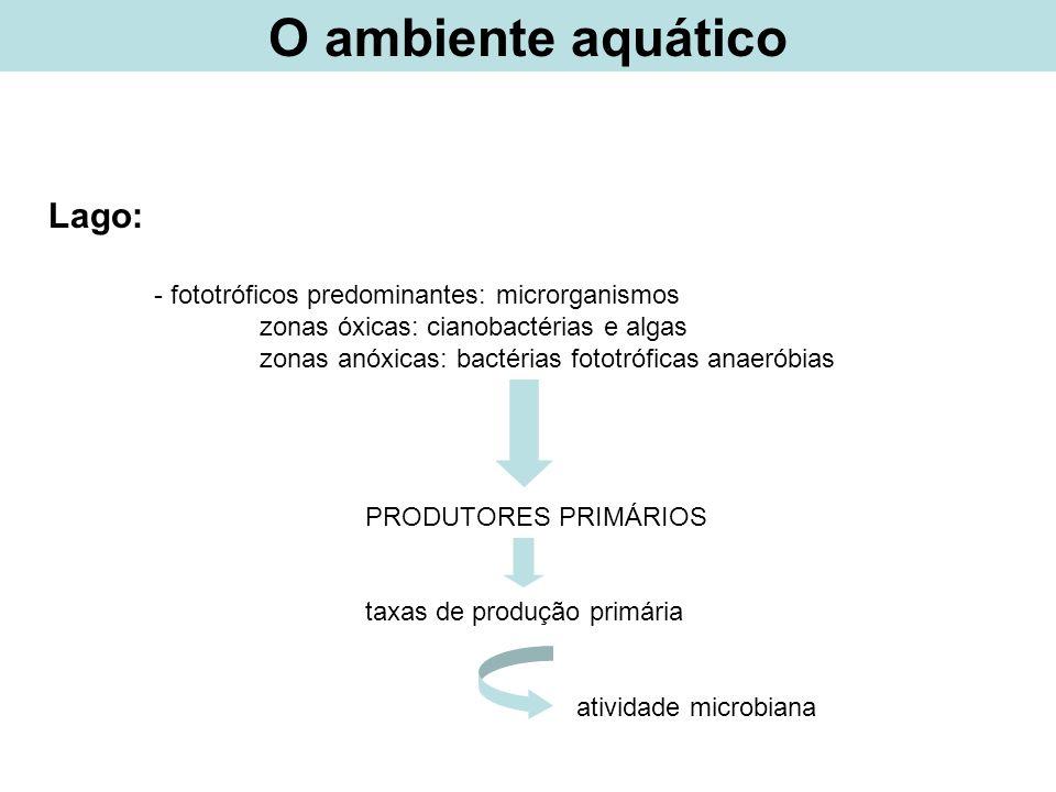 O ambiente aquático Lago: - fototróficos predominantes: microrganismos