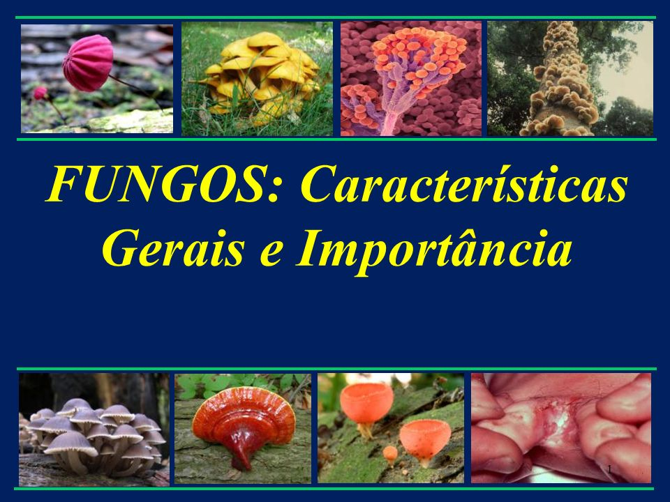 FUNGOS: Características Gerais e Importância