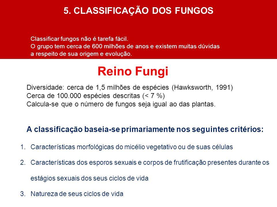 5. CLASSIFICAÇÃO DOS FUNGOS