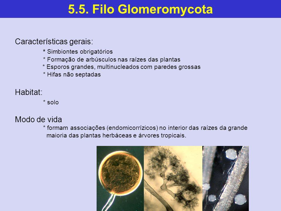 5.5. Filo Glomeromycota Características gerais: