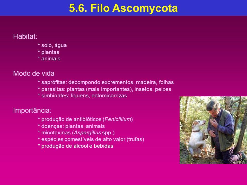 5.6. Filo Ascomycota Habitat: * solo, água Modo de vida