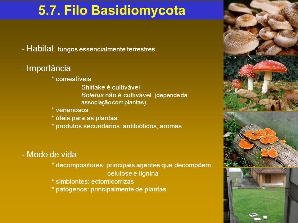 5.7. Filo Basidiomycota - Habitat: fungos essencialmente terrestres