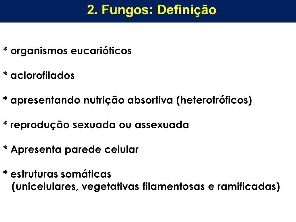 2. Fungos: Definição * organismos eucarióticos * aclorofilados