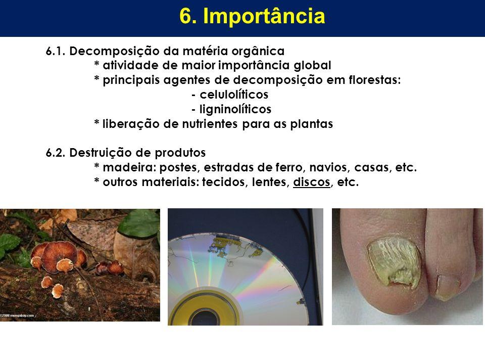 6. Importância 6.1. Decomposição da matéria orgânica