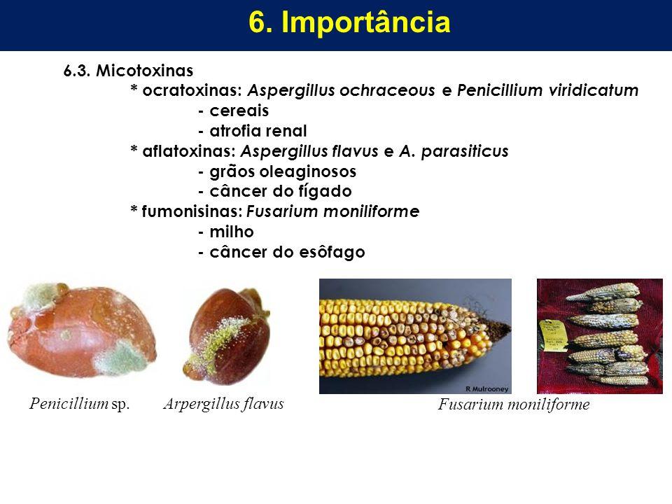 6. Importância 6.3. Micotoxinas