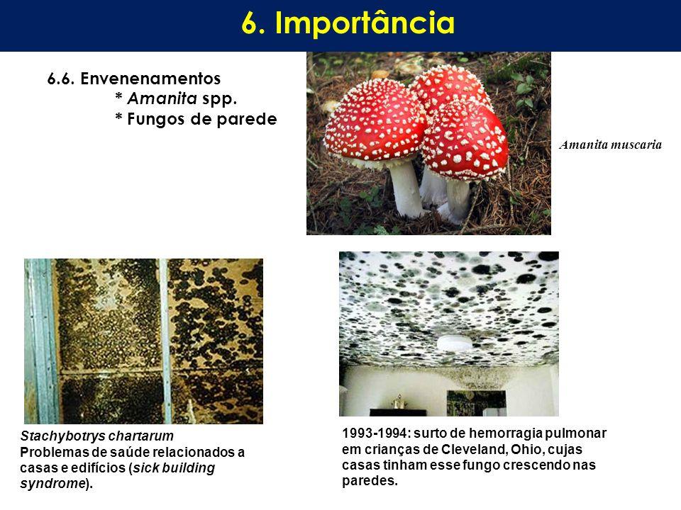 6. Importância 6.6. Envenenamentos * Amanita spp. * Fungos de parede