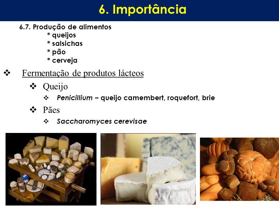 6. Importância Fermentação de produtos lácteos Queijo Pães