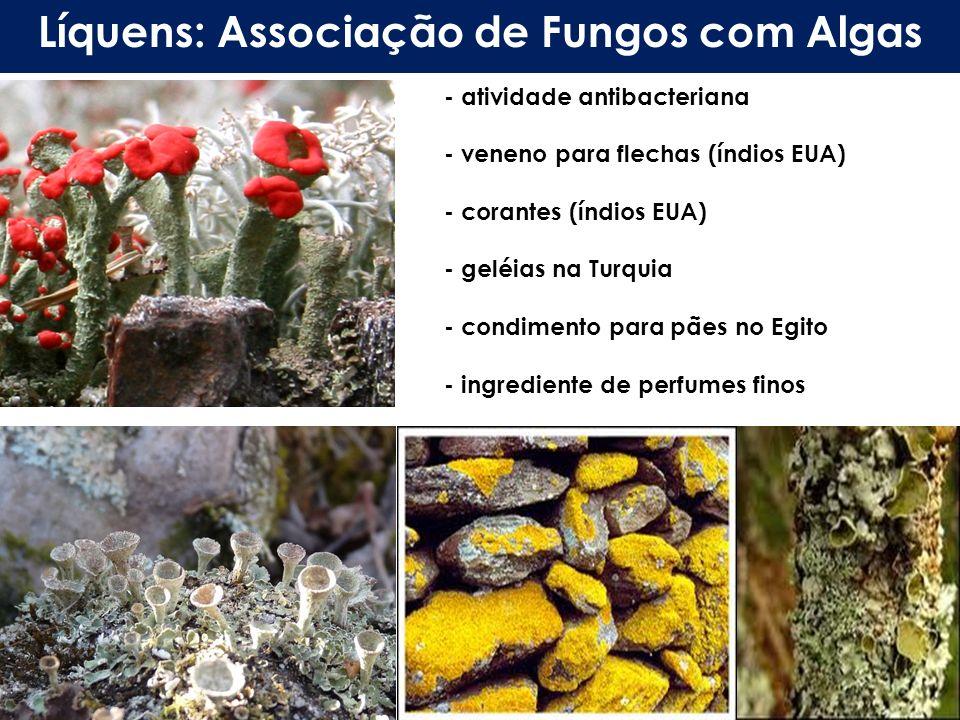 Líquens: Associação de Fungos com Algas